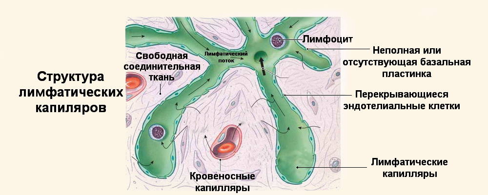 Профилактическая защита организма от грибковых заболеваний